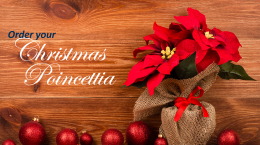 Order Your Christmas Poincettia