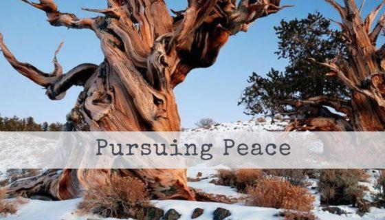 Pursuing Peach